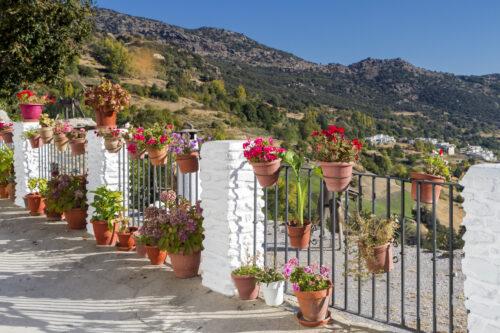 Jour 4 La Sierra Nevada (journée avec un guide accompagnateur) | Organisation séjour éducatif